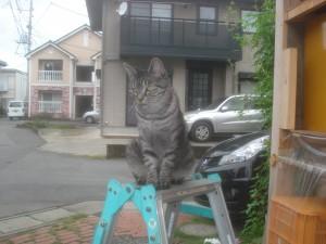 脚立の上でお手伝い?